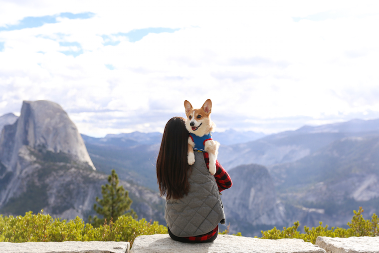 Traveling to Yosemite with a Dog - How to travel to Yosemite with your pets! Plus, some very helpful tips including dog-friendly trails at the park!